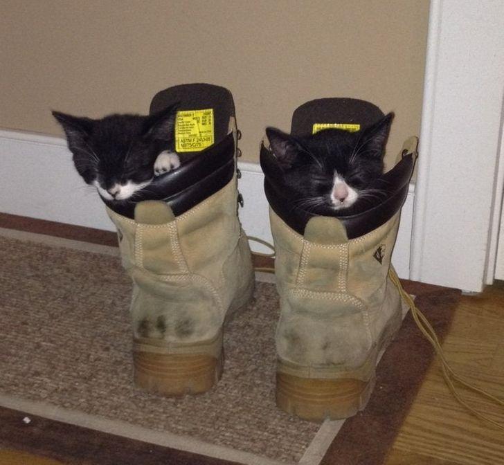 два котенка сидят в ботинках