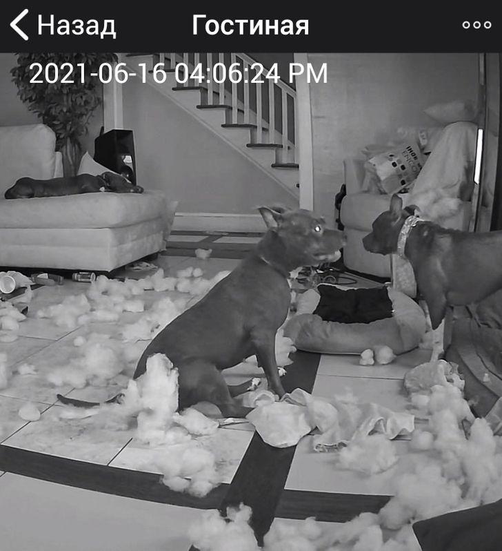 собаки на кадре видеонаблюдения