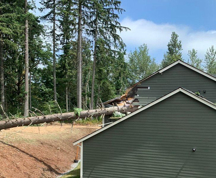 сосна пробила крышу дома