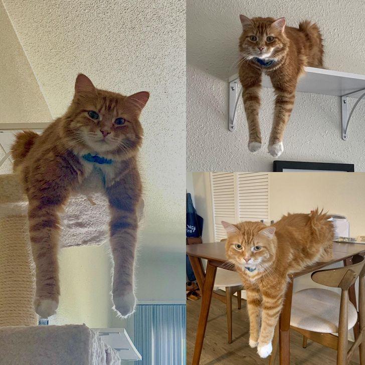 рыжий кот сидит, свесив лапы