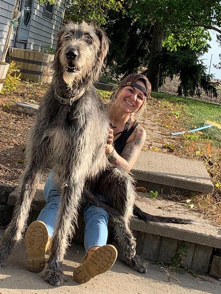 пес сидит на коленях у женщины