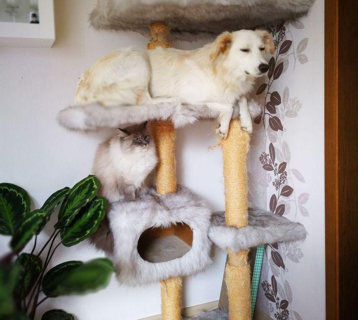 пес сидит на кошачьем дереве