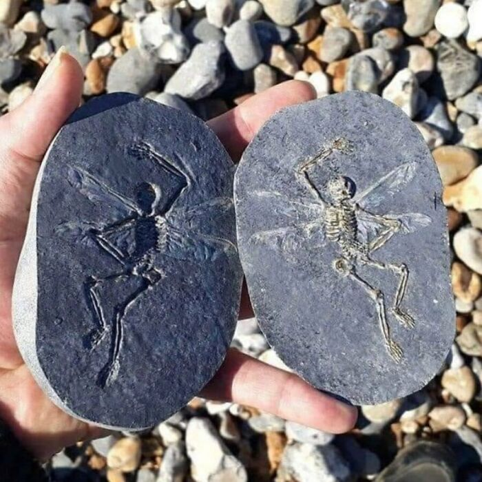 отпечаток на срезе камня