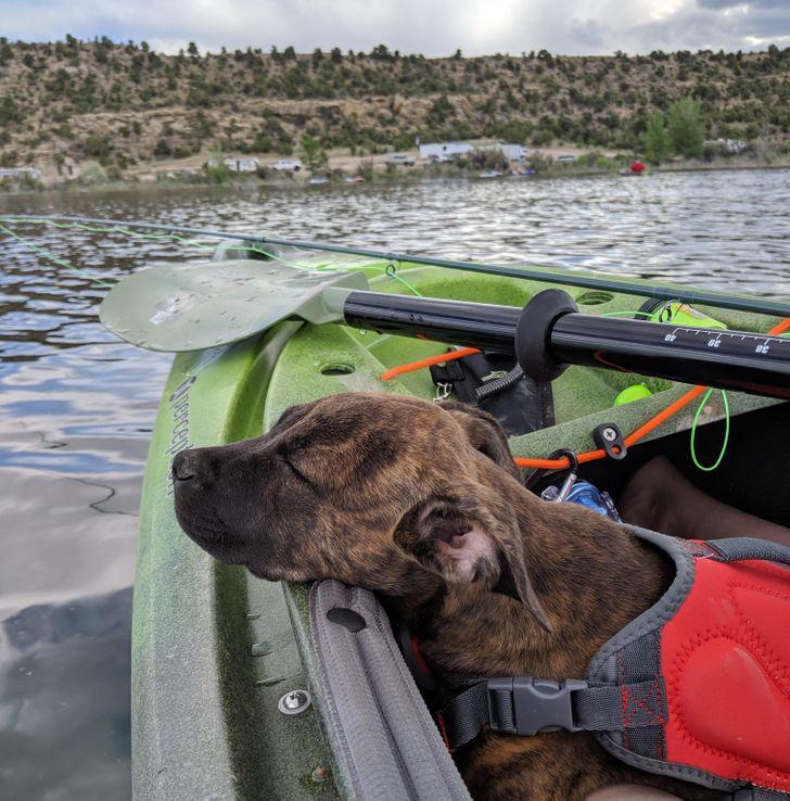 собака спит в надувной лодке на реке