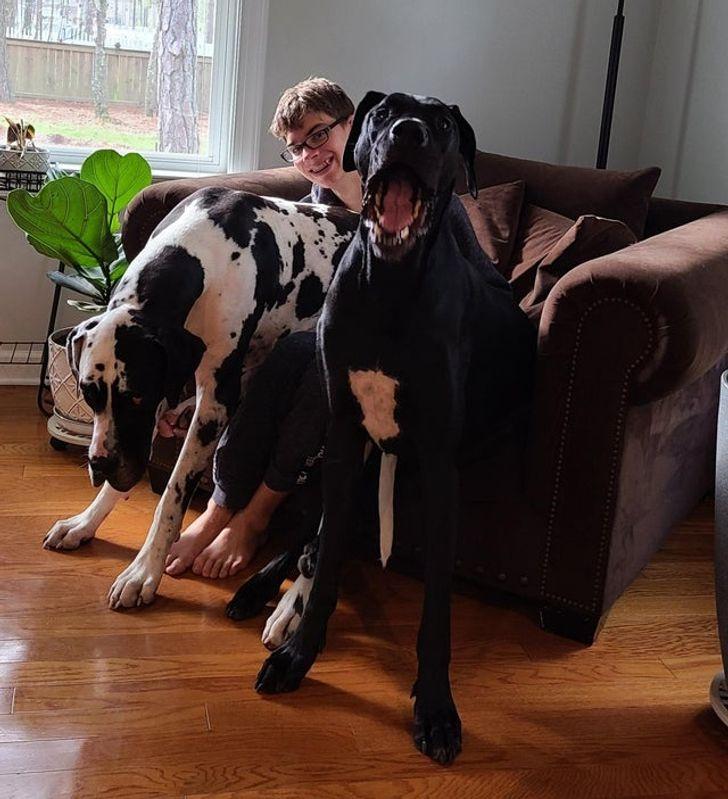 две собаки сидят на парне в кресле