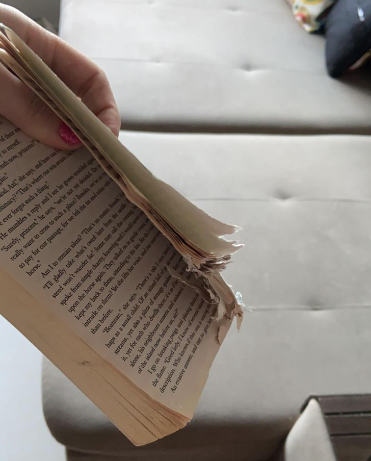 погрызанная книга