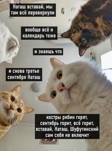 мем с котами и наташей