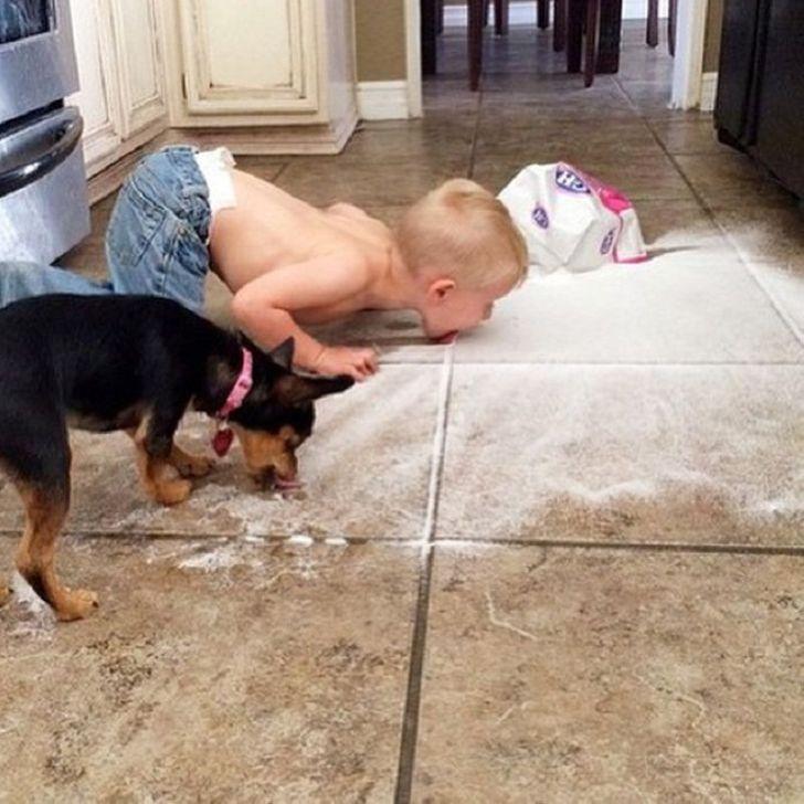 ребенок и собака едят с пола