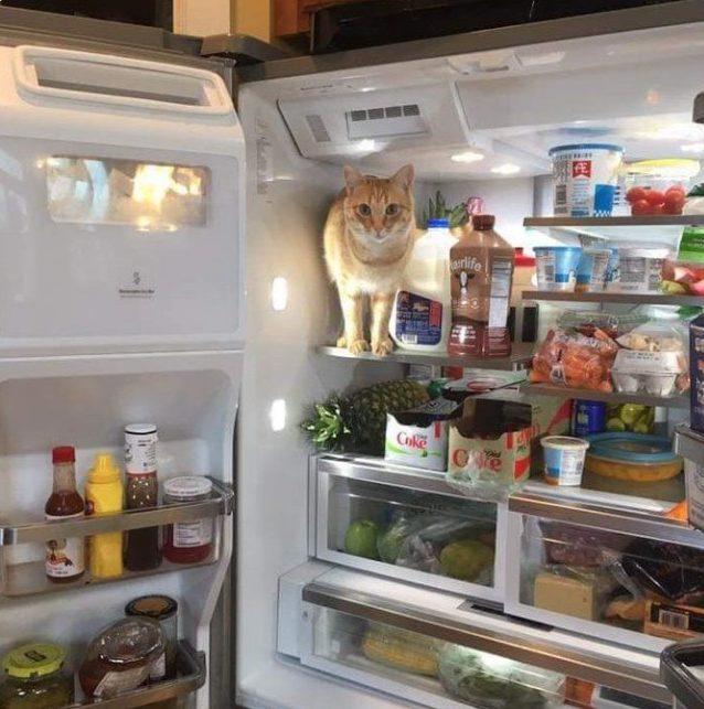 рыжий кот сидит на верхней полке в холодильнике