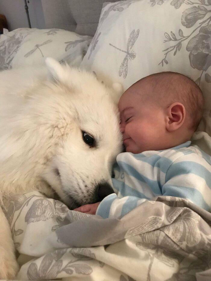 белая собака лежит рядом с малышом