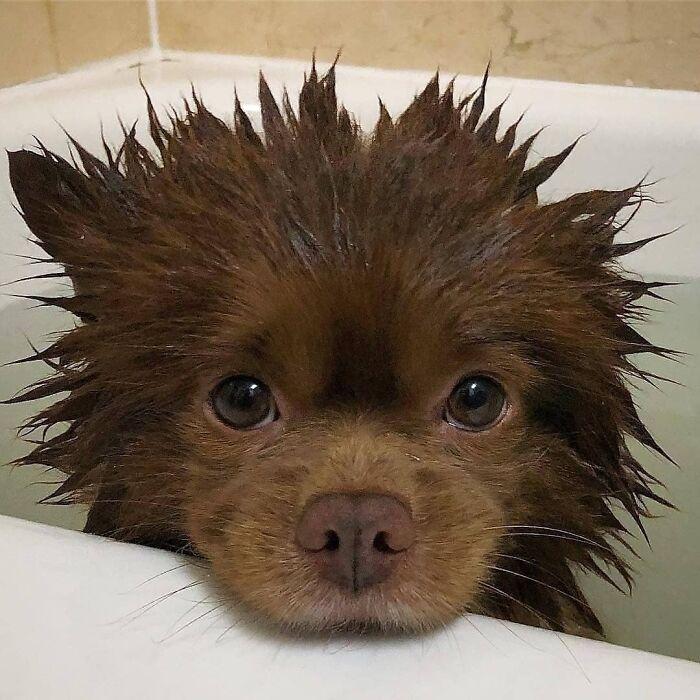 мокрый щенок в ванне