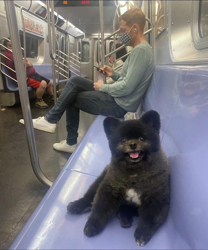 черная собака на сидении в метро