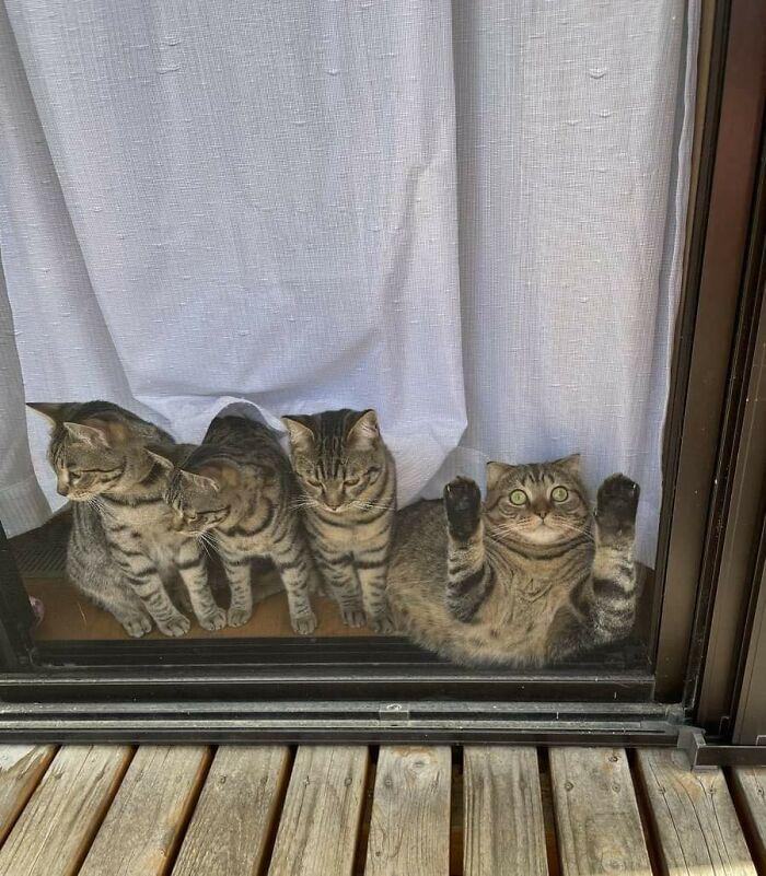 15 фото о том, что что-то не так с котом