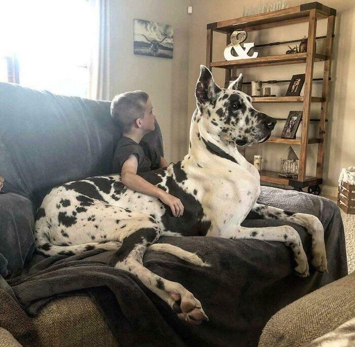пес сидит на диване с мальчиком