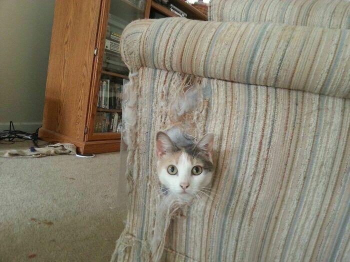 кот выглядывает из кресла
