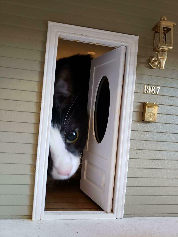 черно-белый кот в кукольном домике