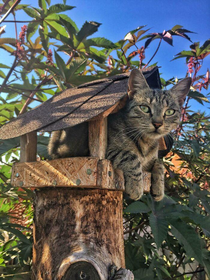 кошка сидит в кормушке для птиц