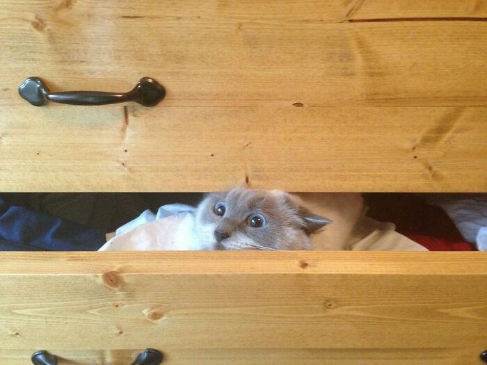 кошка в ящике комода