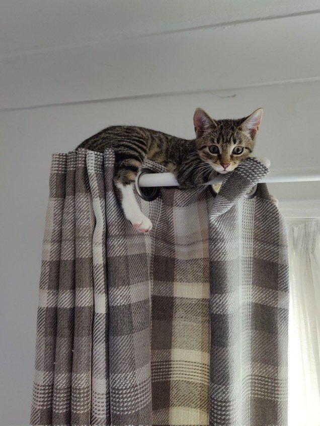котенок сидит на карнизе