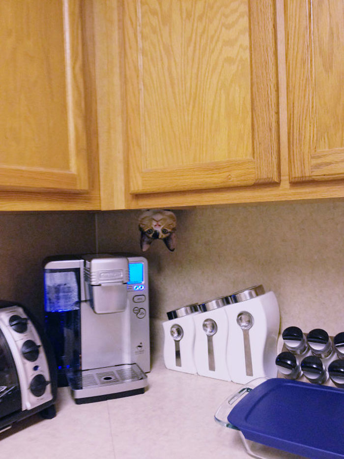 кошка выглядывает из-за кухонного шкафчика