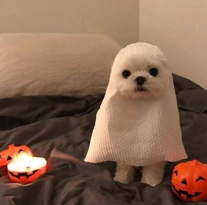 15 фото животных, готовых отметить Хэллоуин хоть сегодня